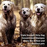 Veterinary Formula Solutions Triple Strength Dirty Dog Concentrated Shampoo – DirtRepel Technology Cleans Extra Dirty and Smelly Dogs – With Wheat Protein, Shea Butter, Aloe, Vitamin E (17oz)