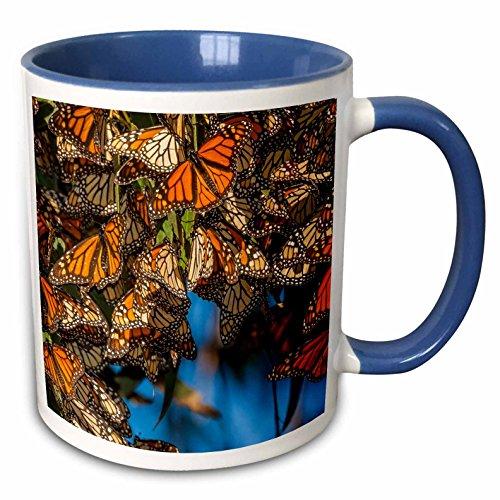 3dRose 209015_6 USA California Pismo Beach. Migrating Monarch Bu Ceramic Mug, - Beach Outlet Pismo