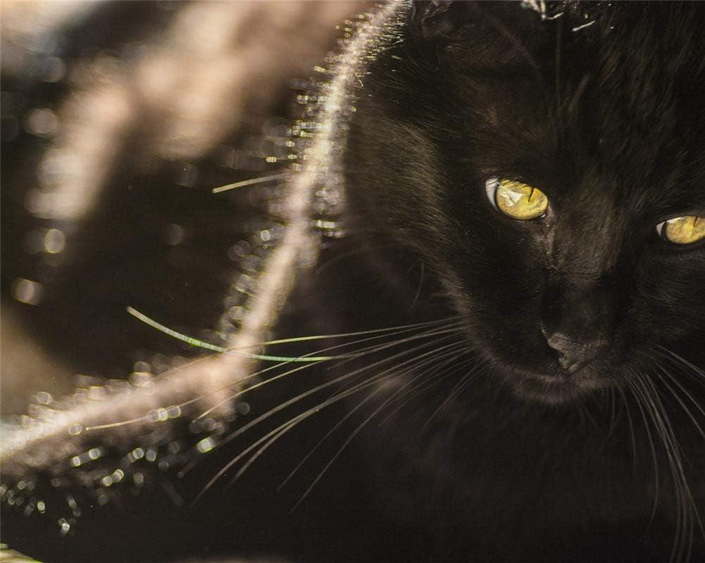 Punto De Cruz Diamante Kit Completo Diy Gato Negro Goteó Ojos ...
