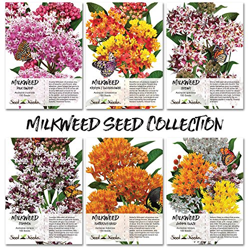 - Seed Needs Milkweed Seed Collection (6 Individual Seed Packets) Open Pollinated Seeds