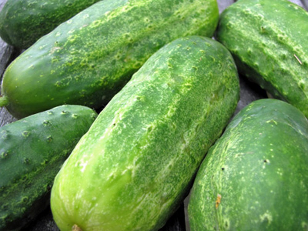CUCUMBER, BOSTON PICKLING CUCUMBER SEEDS , HEIRLOOM, ORGANIC 100 SEEDS, GREAT FOR PICKLING Country Creek Acres