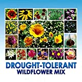 Search : Drought Resistant Tolerant Wildflower Seeds - Bonus 8 eBook Gardening Series - Open-Pollinated Bulk Flower Seed Mix for Beautiful Perennial, Annual Garden Flowers - No Fillers - 1 oz Packet
