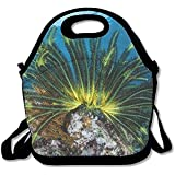 A Colorful Crinoid Clings To A Shallow Reef In Indonesia This Part Of The Tropical Pacific Harbors Best Graphic Lunch Tote Lunch Bag School Mid-sized