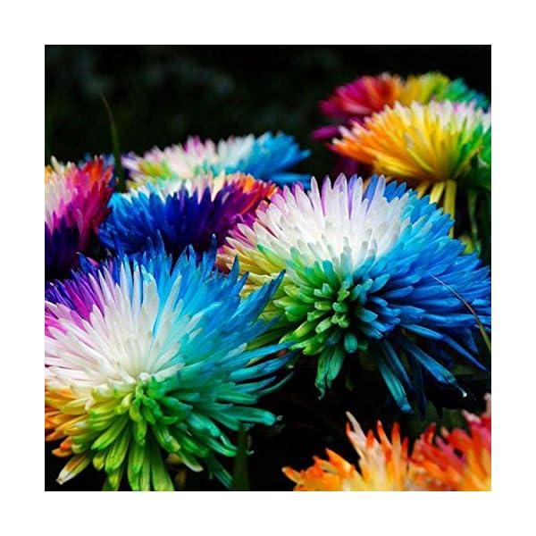 Ncient 20/50/100 Semi Sementi di Margarita di Color Di Arcobaleno Semi di Fiori Rari Fiori Piante per Orto Giardino… 2 spesavip