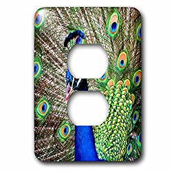 Mark Grace ANIMALS - birds - A Peacock proudly displaying and shaking his plumage to his mates - Light Switch Covers - 2 plug outlet cover (lsp_243342_6)