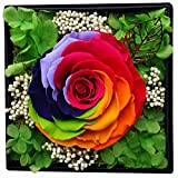Preserved flower roses, Set of beauty roses and the beast, Handmade diy Charm gift box Valentine Never wither royals Wedding Valentine's day,Anniversary, Birthday-G 15x15x12cm(6x6x5inch)