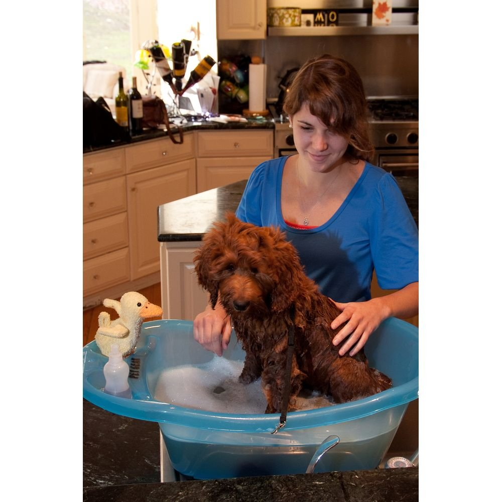 Pet Shower And Bath Supplies : Amazon.com: Pet Gear Pup Tub, For Pets Up To  20 Pounds, Ocean Blue
