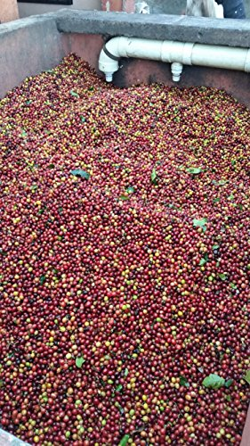 Colombian Green Unroasted Coffee Beans 3- Pounds Single Origin Farm Barcelona