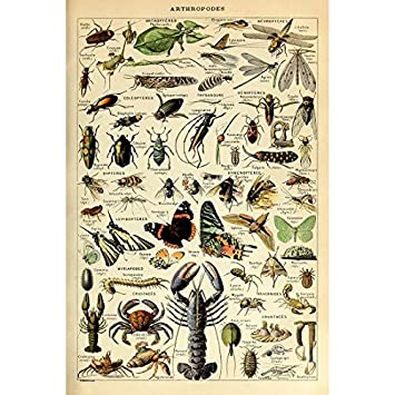 Vintage Poster Print Art Arthropod Insects Species Identification Reference Collection Chart Diagram Entomology Pop Wall Decor