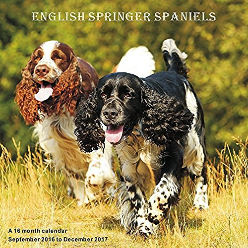 English Springer Spaniels 2017 Wall Calendar