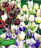 BALDUR-Garten Tulpen-Mix-Kollektion, 30 Zwiebeln