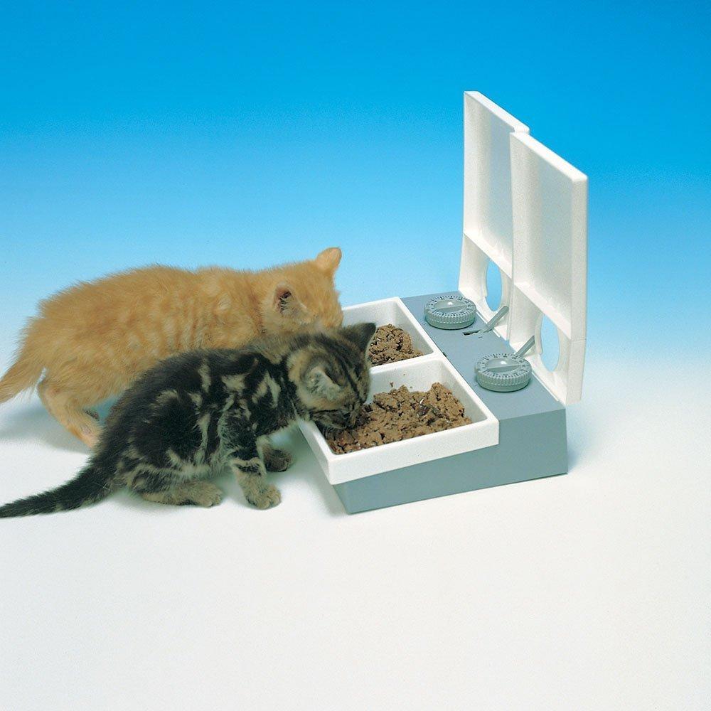 Cat Mate C20 Comedero automático para mascotas: Amazon.es: Productos para mascotas