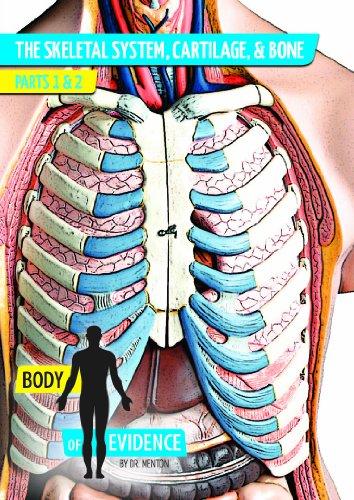 Body of Evidence: Skeletal System, Cartilage, & Bone