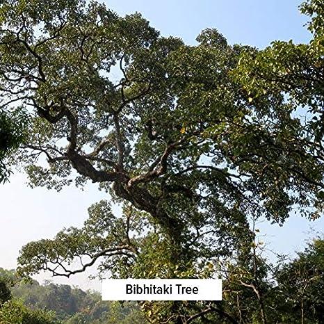 Amazon.com: Banyan Botanicals Bibhitaki Powder - Certified Organic, 1/2 Pound - Terminalia belerica - Detoxification and rejuvenation for kapha*: Health ...