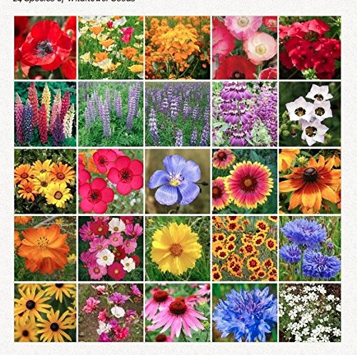 Southwest Wildflower Seed Mix - Annuals and Perennials