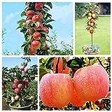 20pcs Per Bag Bonsai Apple Tree Seeds Fruit Garden Plants Garden Yard Outdoor