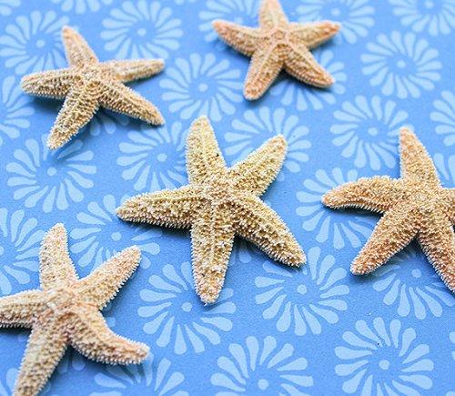 Mini Sugar Starfish 1-2