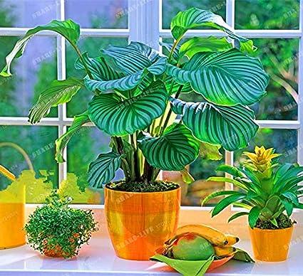 on ze houseplant