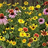 900K Seeds or 2 LB - Midwest Wildflower Mix Seeds