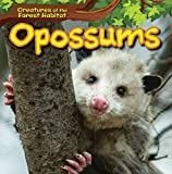 Opossums (Creatures of the Forest Habitat)
