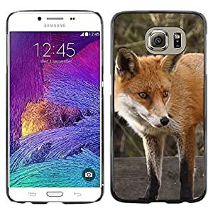 Hot Style Cell Phone PC Hard Case Cover // M99999175 Fox // Samsung Galaxy S6 (Not Fits S6 EDGE)