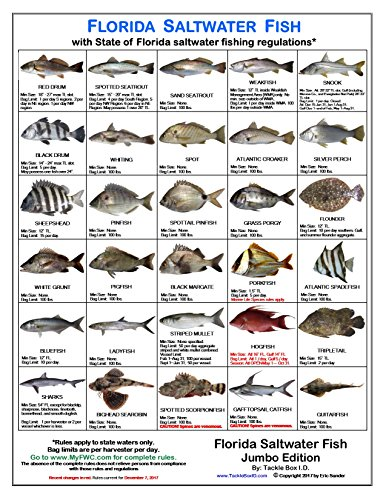 Fish Rule - 8