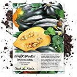 Seed Needs, Table King Acorn Winter Squash (Cucurbita Pepo) 45 Seeds Non-GMO