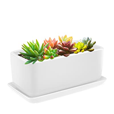 Flexzion 10 Inch Rectangular Ceramic Succulent Planter Pot - Cactus Herb Flower Container Window Box Holder with Removable Drip Tray Base for Tabletop Desktop Indoor Outdoor Home Office Garden (White) : Garden & Outdoor