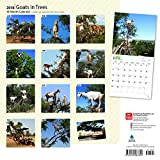 Goats in Trees 2018 12 x 12 Inch Monthly Square Wall Calendar, Best Calendar Funny Farm Animals