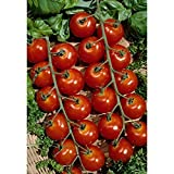 225+ Organic Super Sweet 100 Tomato Seeds - DH Seeds - UPC0742137106131