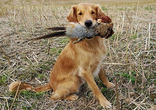 Dog toys-handmade-Pet Toy-Apportel-Dummy-Hunt-Dog-Keyring