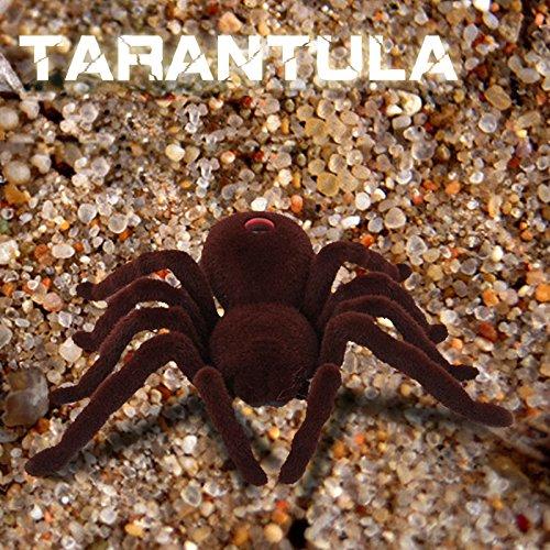Tarantula hispana $15 christmas gift ideas