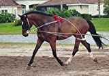 Hunters Saddlery Ultimate Horse Lunging Training