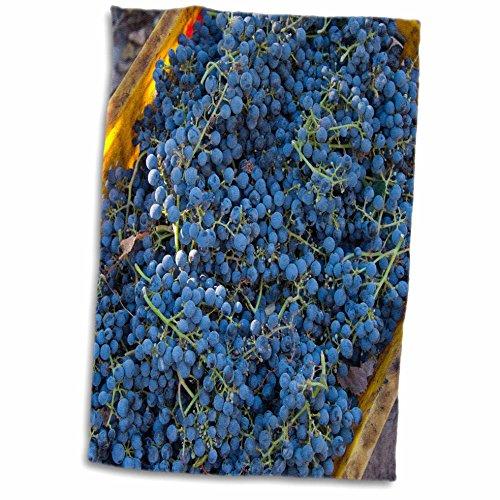 3drose-danita-delimont-grapes-china-xinjiang-manas-cabernet-sauvignon-grapes-from-a-vineyard-12x18-h