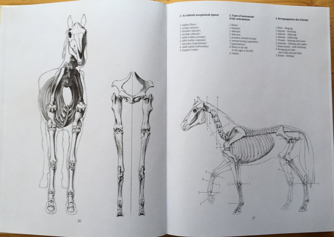 Anatomy of the Horse for Artists = A ló művészeti anatómiája ...