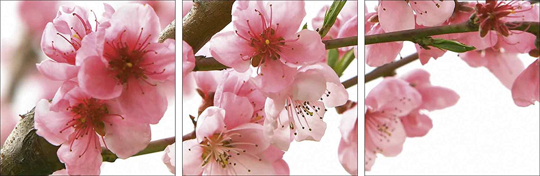 Artland Qualitätsbilder I Glasbilder Deko Glas Bilder 90 x 30 cm mehrteilig Botanik Blumen Blüte Foto Pink Rosa A5LF Pfirsichblüten