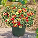 Large Pack - Patio Garden Special ! 3 kinds of seeds!! Perfect for small spaces!