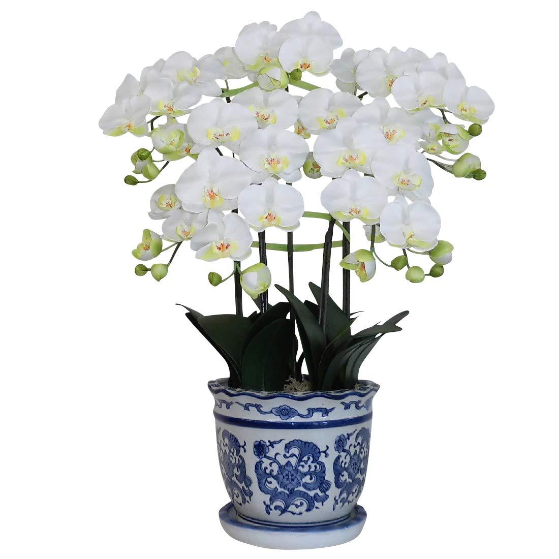 光触媒の胡蝶蘭 鉢植え 造花 Mサイズ-5本立 H70cm(白/花弁黄-青のデザイン鉢) B00LKE3QEW 鉢カラー-bld:青柄鉢