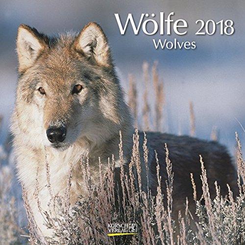 Wölfe 2018: Broschürenkalender mit Ferienterminen. Fasziniernde Bilder von Wölfen. 30 x 30 cm