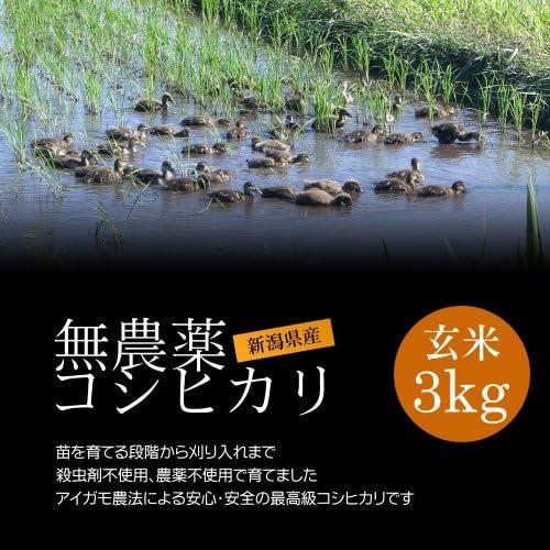 無農薬米 コシヒカリ 玄米 3kg[即日発送] エコ包装/アイガモ米 新潟米 新潟コシヒカリ