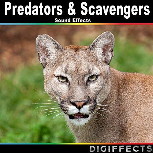 Amazon.com: Lion Roars Version 2: Digiffects Sound Effects ... - photo#42