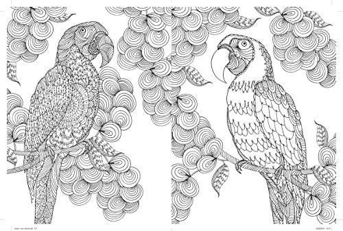 amazoncom colour your world paradise island adult coloring book office products - Pics To Colour In