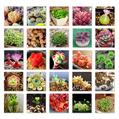 MileMelo Succulent Plants Mixed Seeds 500Pcs for Planting Cactus Stone Flower Gardening Seeds