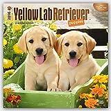 Labrador Retriever Puppies, Yellow 2016 Square 12x12 (Multilingual Edition)