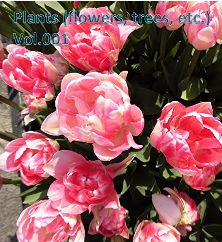 Plants (flowers, trees, etc.) ()