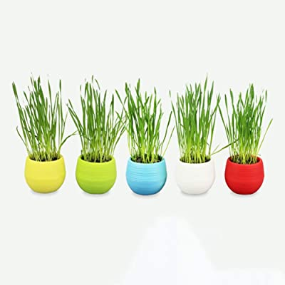 Tutuba Cat Grass Seeds Kit-Natural Hairball Control and Remedy, Easy Growing,Grow Wheat Grass for Dog, Cat (Random Color): Pet Supplies