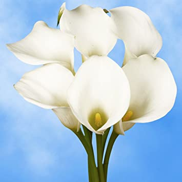 globalrose 18 fresh open cut white calla lilies fresh flowers for birthdays weddings or - Calla Lily Flower