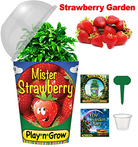 (Children's Organic Plant Kit - Strawberry Window Garden - Complete Indoor Grow Set - Seeds, Soil, Planter, Greenhouse Dome, Water Tray & Cup, Growing Guide, Diary. Unique Educational DIY Kid's Gift.)