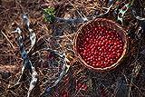 100% Natural Acacia Red Beans Bracelet Ornament