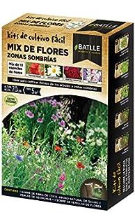 Bulbos - Jacintero + Jacintos Rosa - Batlle: Amazon.es: Jardín